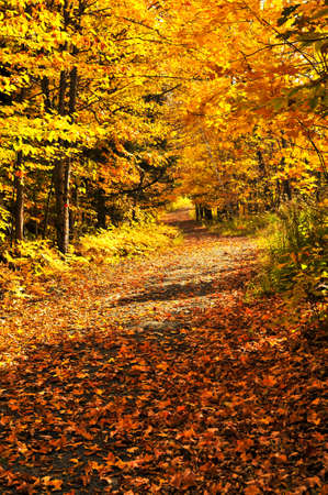 Colorful fall forest on a warm autumn day Stock Photo - 5021533