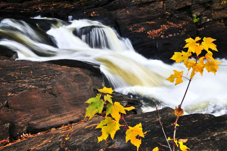 Forest river in the fall. Algonquin provincial park, Canada. Stock Photo - 5021540
