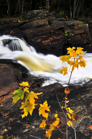 provincial forest parks: Forest river in the fall. Algonquin provincial park, Canada.