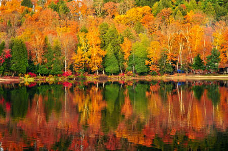 Forest of colorful autumn trees reflecting in calm lake photo