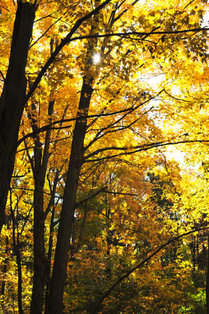 Group of colorful trees in autumn forest photo