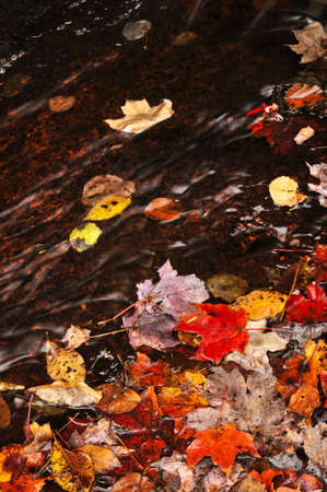 Small brook in fall forest with colorful leaves photo