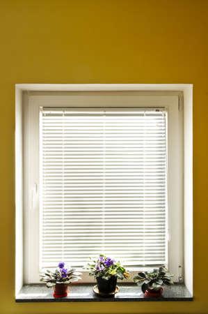 persiana: Orizzontale tende sulla finestra con tre houseplants Archivio Fotografico