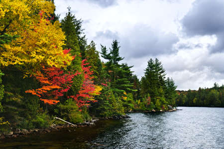 Lake shore of fall forest with colorful trees photo