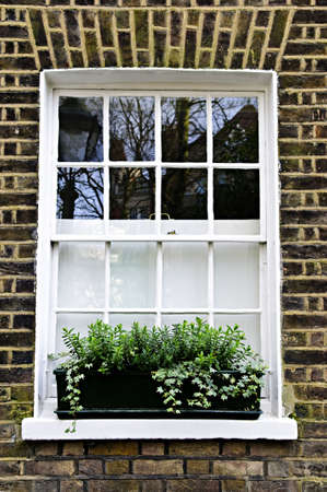 architectural tradition: Window with plant box in brick wall London