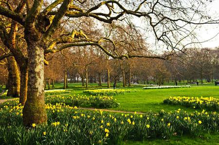 ロンドンのセント ・ ジェームズ公園の水仙咲く 写真素材