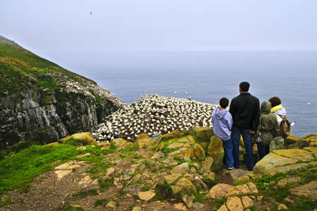 Family watching northern gannets at Cape St. Mary's Ecological Bird Sanctuary in Newfoundland, Canada photo