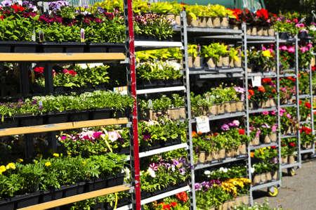 Bloemen en planten te koop voor planten in het voorjaar van  Stockfoto