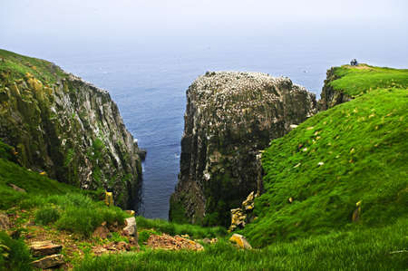 nfld: Tourists at cliffs of Cape St. Marys Ecological Bird Sanctuary in Newfoundland