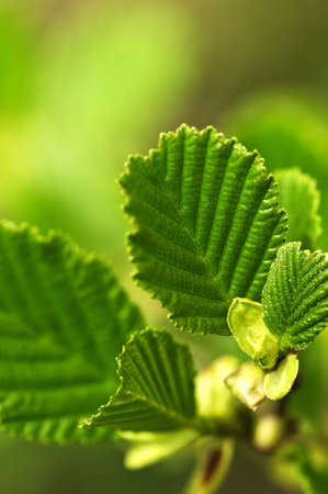 Green spring leaves budding new life in clean environment photo