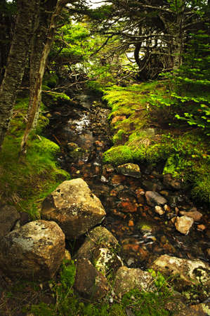 freshwater: Small stream among fresh green summer forest in Newfoundland