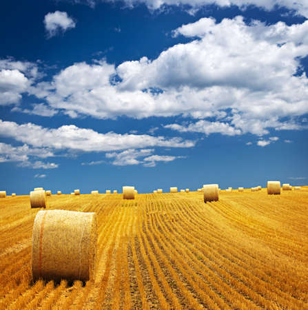 Agricultural landscape of hay bales in a golden field photo