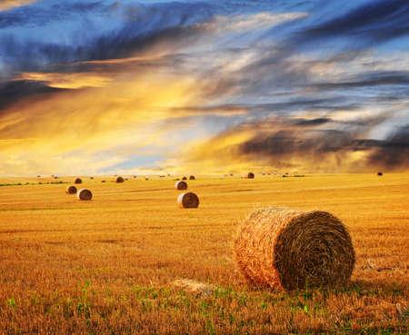 fardos: Puesta de sol de oro sobre campo de granja con fardos de heno