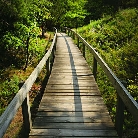 Wooden path through forest. Pinery provincial park, Ontario Canada photo