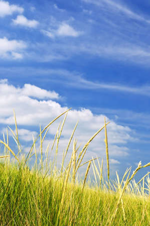 Tall green grass growing on sand dunes against cloudy sky photo