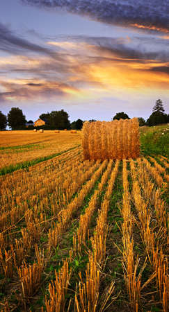 hayroll: Golden sunset over farm field with hay bales Stock Photo