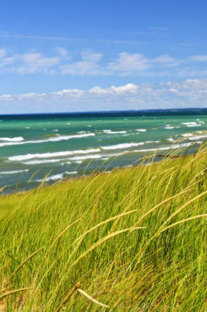 pinery: Grass on sand dunes at beach. Pinery provincial park, Ontario Canada
