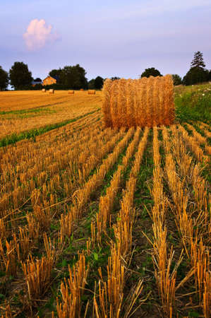 hay bale: Farm field with hay bales at dusk Stock Photo