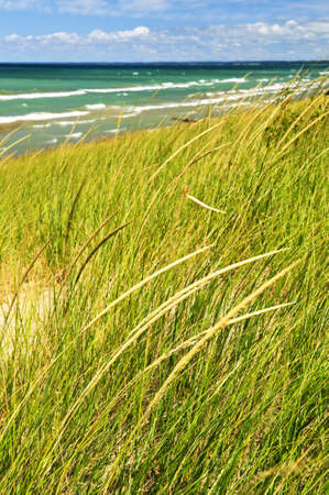 Grass on sand dunes at beach. Pinery provincial park, Ontario Canada photo