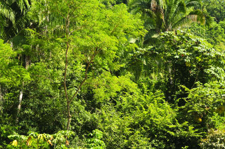 Background of lush tropical jungle at Pacific coast of Mexico photo