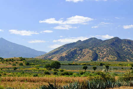agave: Lanscape with agave cactus fields near Tequila in Jalisco, Mexico Stock Photo