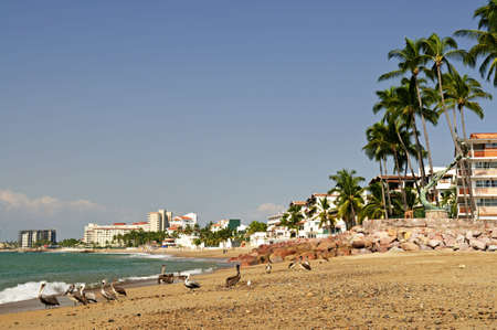 Pelicans on Puerto Vallarta beach in Mexico Stock Photo - 6621580