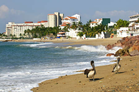 Pelicans on Puerto Vallarta beach in Mexico Stock Photo - 6648816