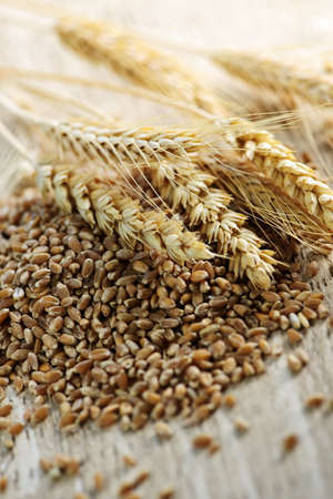 Closeup on pile of organic whole grain wheat kernels and ears photo