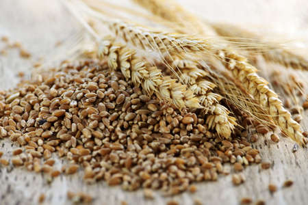 Closeup on pile of organic whole grain wheat kernels and ears Stok Fotoğraf - 6677363