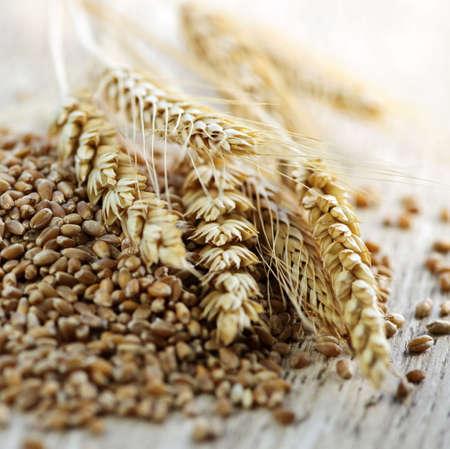 org�nico: Detalle sobre la pila de n�cleos de trigo de grano entero org�nicos y o�dos