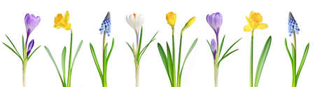 Assorted spring flowers in a row isolated on white background photo
