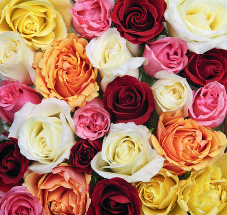Background of assorted multicolored rose flowers from above