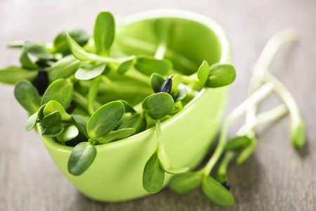 shoots: Organic green young sunflower sprouts in a cup