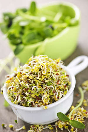 Fresh alfalfa and sunflower sprouts in cups photo