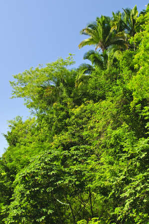 fern  large fern: Background of lush tropical jungle at Pacific coast of Mexico
