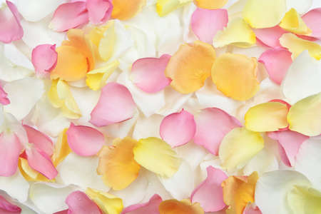 Abstract background of fresh scattered rose petals Stock Photo