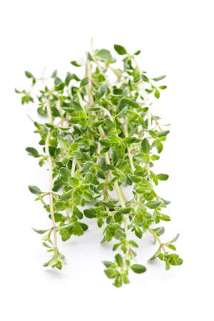 Fresh green thyme closeup isolated on white background Zdjęcie Seryjne