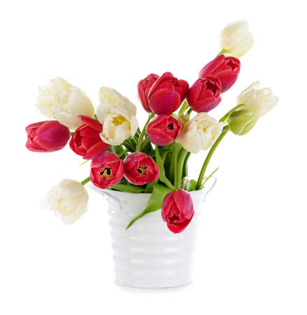 Bouquet of red and white tulips isolated on white background photo