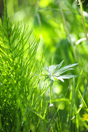 Closeup of green grass and plants in summer photo