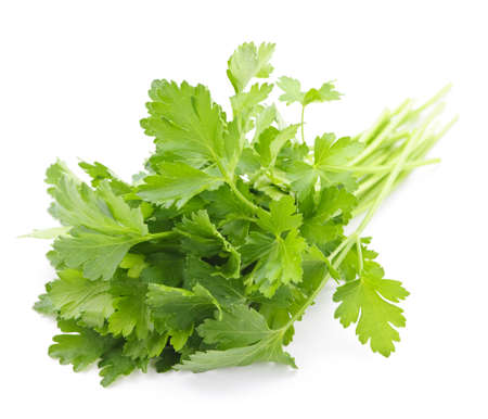 Bunch of Fresh green parsley isolated on white background photo