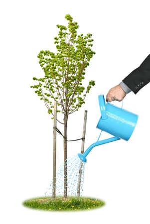 Hand eines Kaufmanns Bewässerung jungen Baum