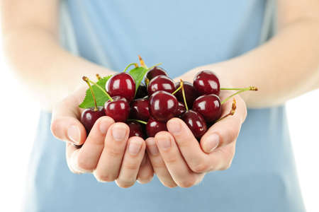 Two hands holding bunch of fresh cherries