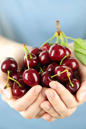 Two hands holding bunch of fresh cherries Stock Photo - 7701767
