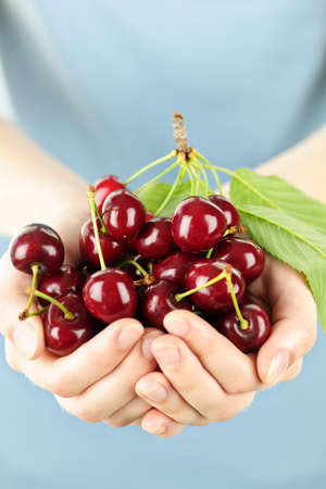 offering: Two hands holding bunch of fresh cherries