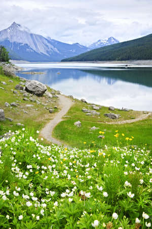 Wildflowers on the shore of Medicine Lake in Jasper National Park,  Canada Stock Photo - 7776387