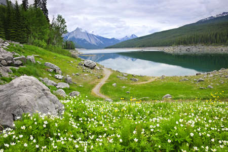 Wildflowers on the shore of Medicine Lake in Jasper National Park,  Canada Stock Photo - 7776493