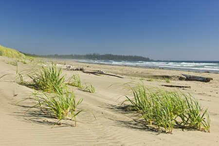 Sand dunes on Long Beach in Pacific Rim National park, Canada photo