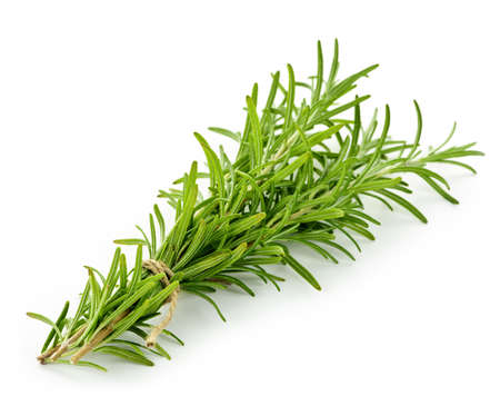 twig: Rosemary sprigs tied in bundle isolated on white background Stock Photo