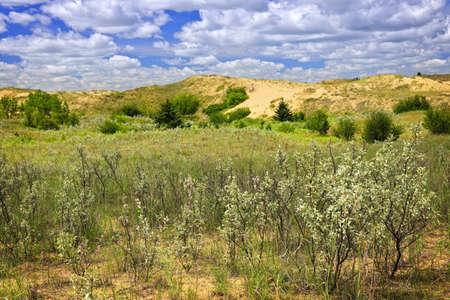 provincial forest parks: Landscape of Spirit Sands dunes in Spruce Woods Provincial Park, Manitoba, Canada