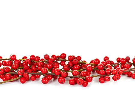 decoration: Red winterberry Christmas border with holly berries on branches